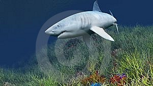 Shark Stock Images - Image: 8559824