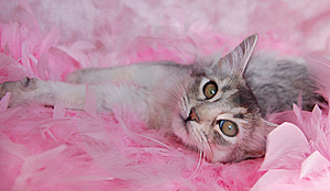 Cat In Pink Feathers Royalty Free Stock Photos - Image: 8563448