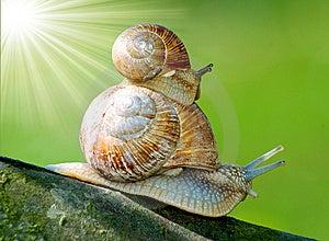 Snails Royalty Free Stock Image - Image: 8563936