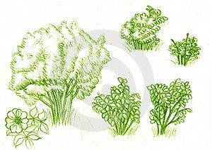 Green Bush Stock Image - Image: 8564741