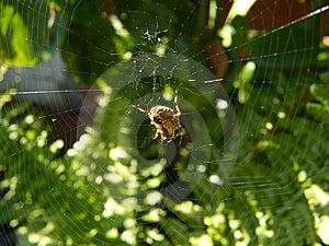 Garden Spider Stock Image - Image: 8565131