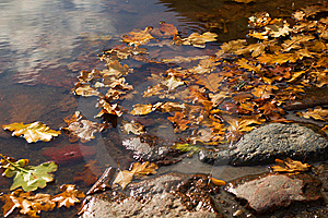 Autumn Pond Royalty Free Stock Image - Image: 8566616