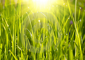 Green Grass Sunset Stock Image - Image: 8566781