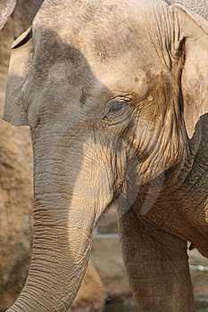 Elephant Stock Photo - Image: 8567530