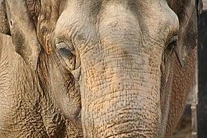 Elephant Stock Images - Image: 8567564