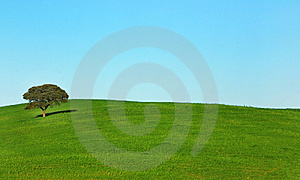 Lonely Tree . Stock Image - Image: 8567941