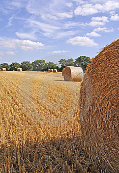 Harvestime Stock Image - Image: 8569501
