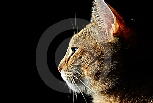 Cat In The Shadows Royalty Free Stock Image - Image: 8569626