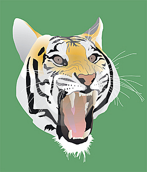 Tiger Stock Images - Image: 8571694