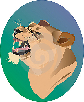 Lioness Stock Photo - Image: 8571760