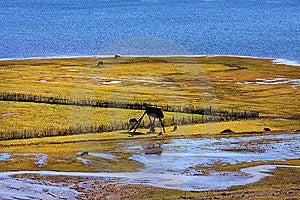 Napahai Royalty Free Stock Images - Image: 8571949