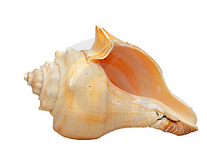 Shell Stock Photography - Image: 8574102