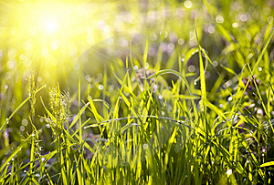 Green Grass Sunset Royalty Free Stock Photos - Image: 8574248