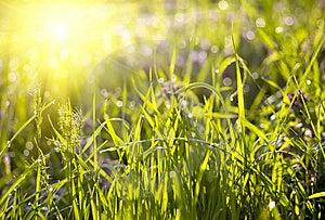 Green Grass Sunset Royalty Free Stock Photos - Image: 8574248