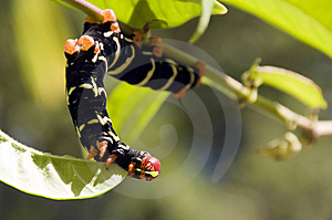 Caterpillar Royalty Free Stock Images - Image: 8578779