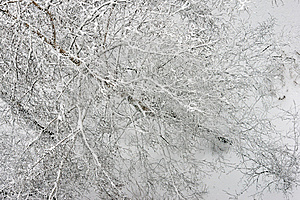 Winter Forest Stock Photo - Image: 8579020