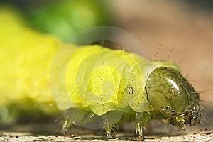 Caterpillar Macro Close Up Stock Image - Image: 8579891