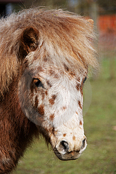 Pony 2 Royalty Free Stock Photography - Image: 8581237