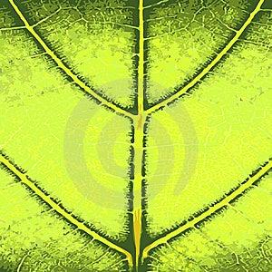 Fim Verde Da Folha Acima Fotos de Stock Royalty Free - Imagem: 8581808