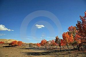 Autumn Landscape Stock Image - Image: 8583421