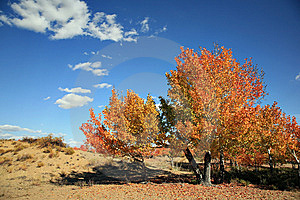 Autumn Landscape Royalty Free Stock Image - Image: 8583426