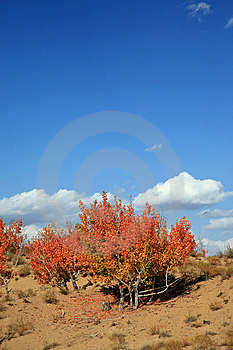 Autumn Landscape Royalty Free Stock Photos - Image: 8583508