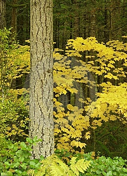 Autumn Forest Scene Royalty Free Stock Image - Image: 8583746