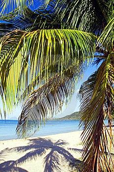 Palm Tree Stock Photo - Image: 8586080
