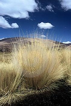 Bolivia Gras Pampasy Obraz Royalty Free - Obraz: 8586906