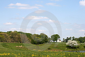 Meadow Stock Photo - Image: 8588620