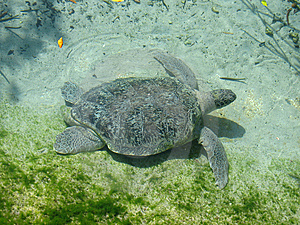Turtle Stock Images - Image: 8588694