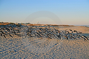Seabirds Royalty Free Stock Image - Image: 8589066