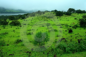 Vibrant Monsoon Greenery Royalty Free Stock Photos - Image: 8589228