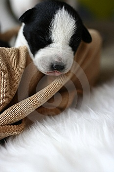 Baby Dog Stock Photos - Image: 8589453