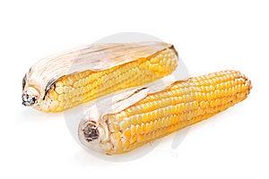 Corn Stock Photography - Image: 8589482