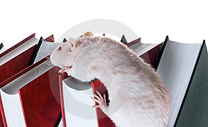 Mouse Stock Photography - Image: 8590272