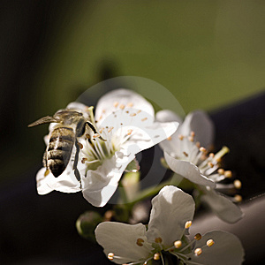 Bee Stock Images - Image: 8591504