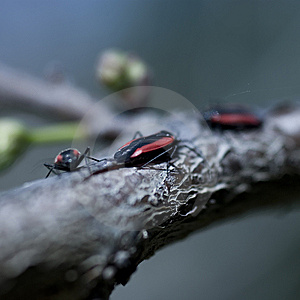 Bugs Royalty Free Stock Photography - Image: 8591537