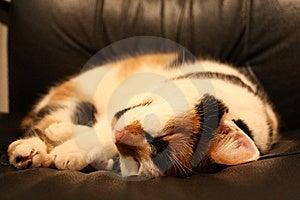Sleeping Cat Royalty Free Stock Photo - Image: 8591745