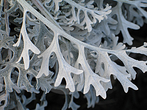 Gray Plant Royalty Free Stock Photography - Image: 8593737