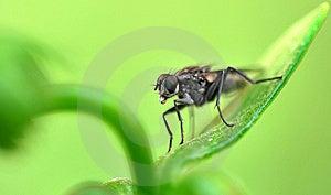 Fly Macro Stock Image - Image: 8594621