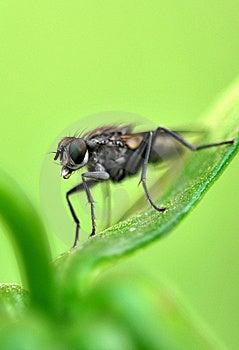 Fly Macro Stock Photography - Image: 8594982