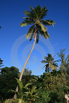 Palm Stock Image - Image: 8596831