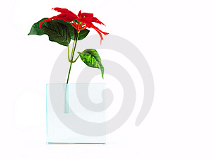 Red Flower In Translucent Vase Isolated On White Stock Image - Image: 8596951