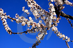 It's Spring Again Stock Photo - Image: 8597200