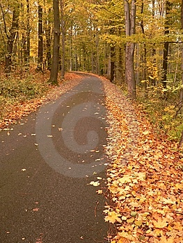 Autumn Road Stock Photography - Image: 8597252