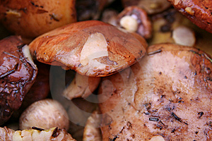 Background From Mushrooms Stock Photography - Image: 8598492