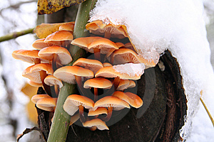 Mushrooms Stock Images - Image: 8598744