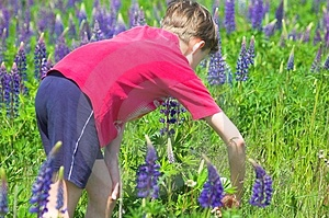 Boy Gathering Flowers Royalty Free Stock Images - Image: 860379