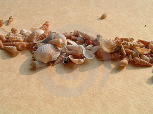 Seashells Stock Images - Image: 864184